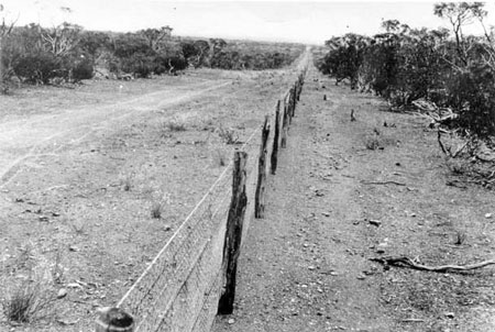 rabbit proof fence essay topics